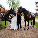 konie-marylki